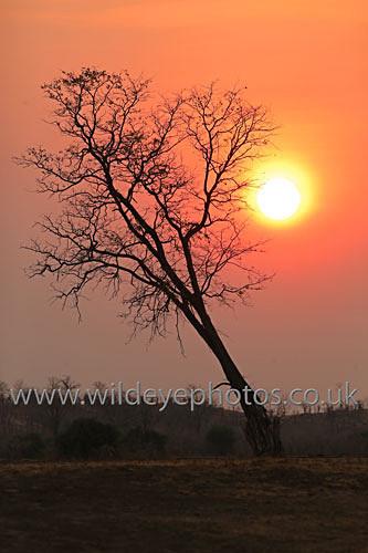 Luangwa Sunset - Landscape & Life