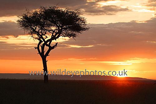 Sunset On The Mara - Landscape & Life