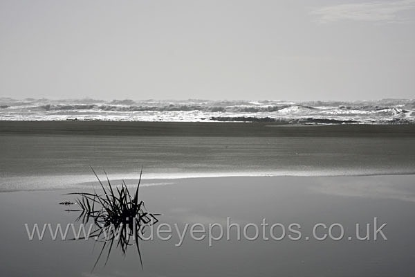 Long Beach Reflection - Black & White