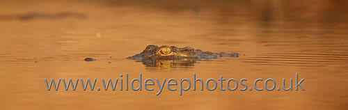 Croc Lookout - Panoramic & Slim Prints