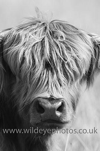 Hughland Portrait - Black & White