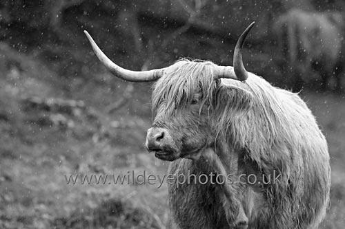Scottish Summer - Black & White