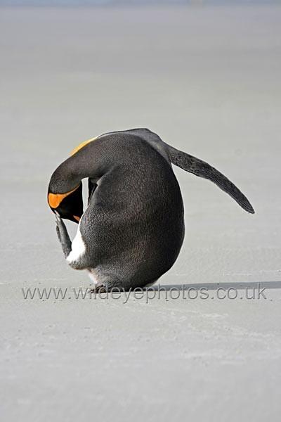 The Thinker - Penguins