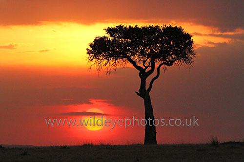 Mara Sunset - Landscape & Life
