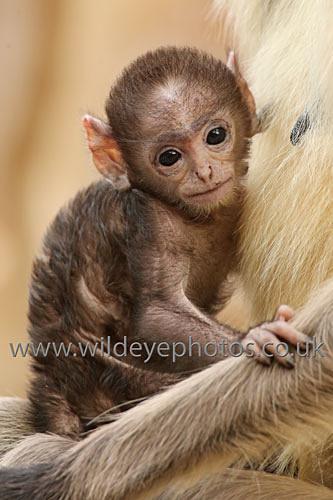 With Mum - Primates