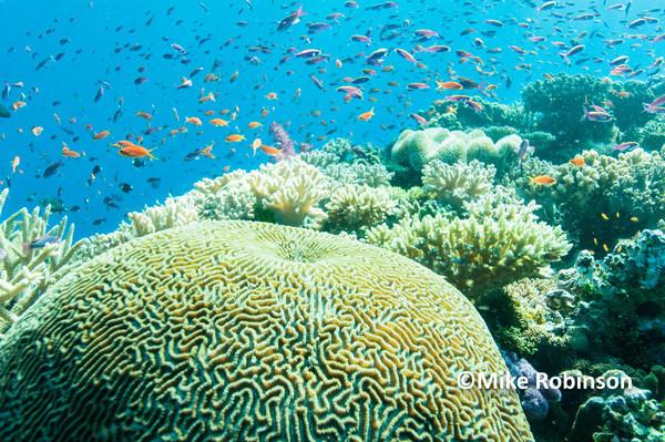 Namena Reef_103The Chimneys - Pacific Memories