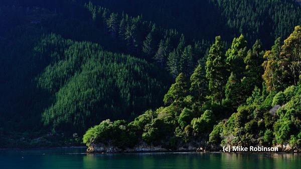 Hitaua Bay_3_trees - South Island, New Zealand