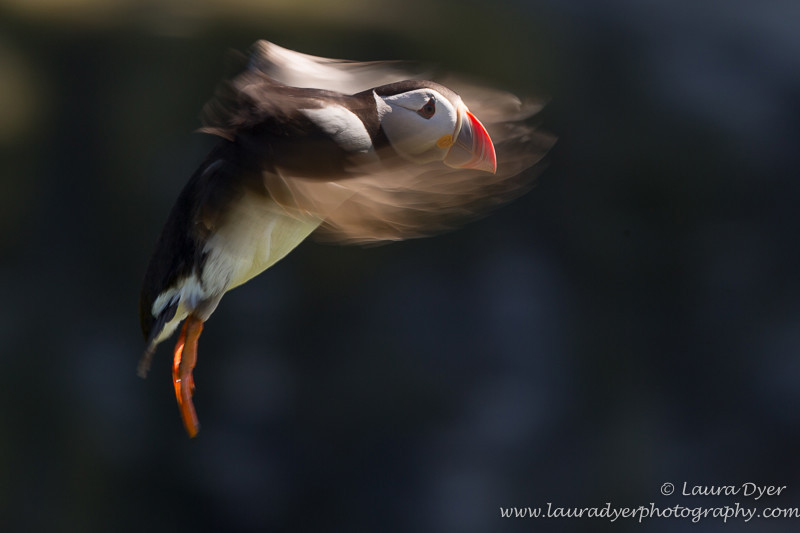 Landing approach - Seabirds