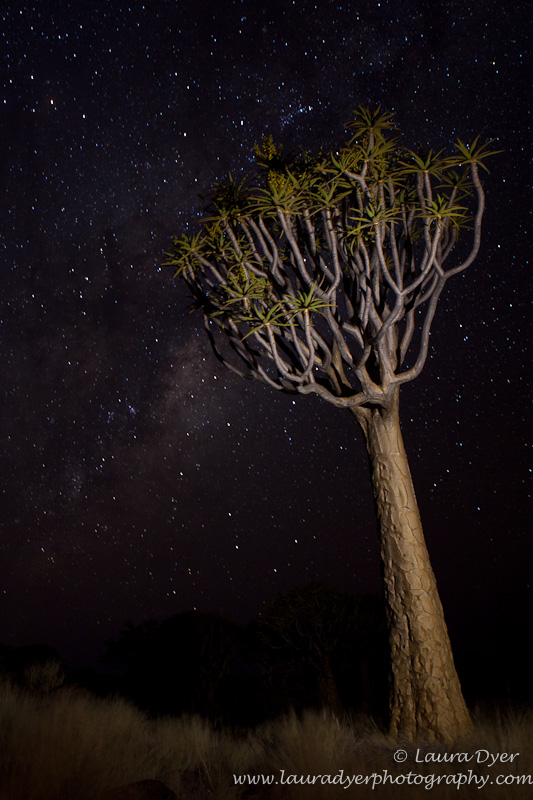 Quivertree and stars