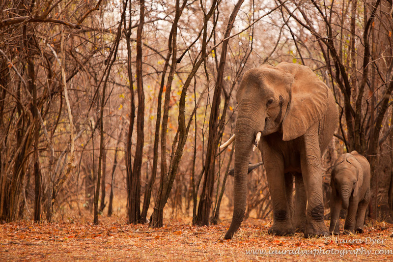 Elephant on a Red Forest Carpet