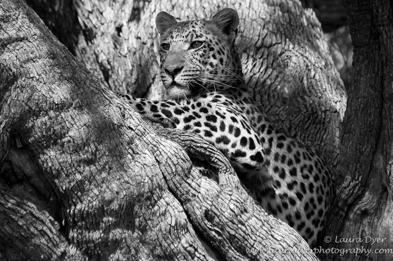 Leopard and bark patterns - Monotone