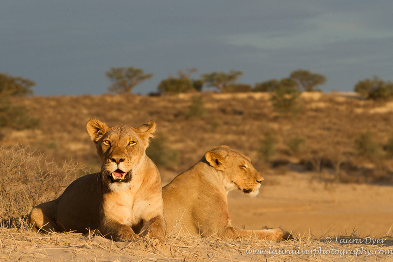 Stormy sunset - Lions