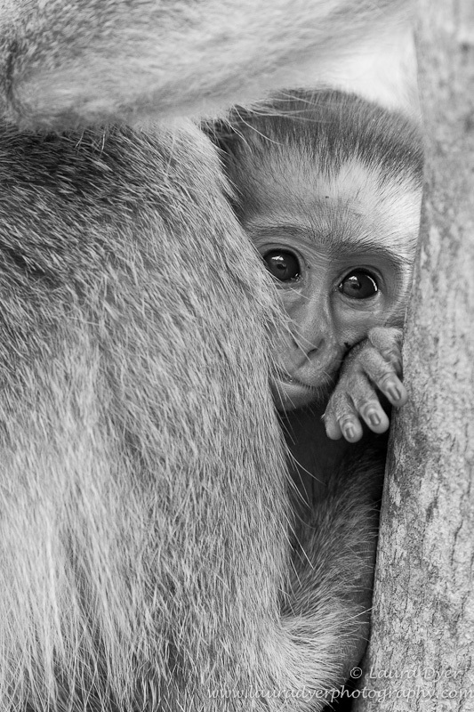 Baby monkey peeping out