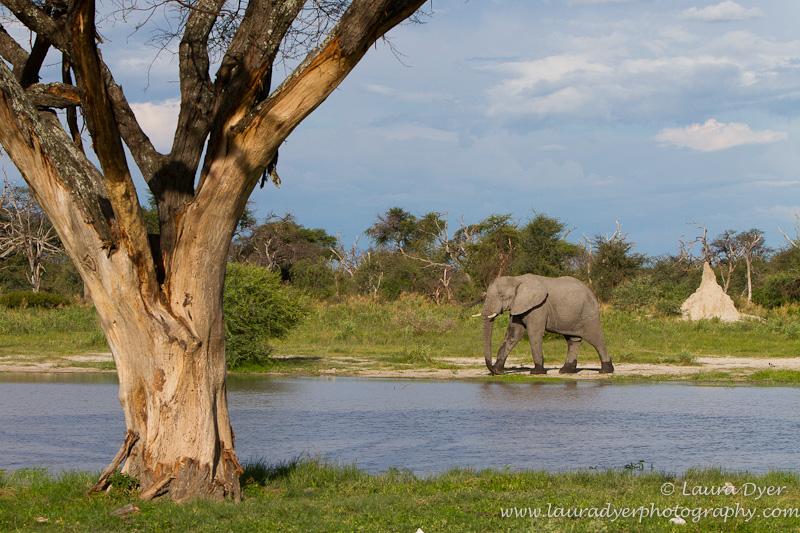 Elephant in Delta environment