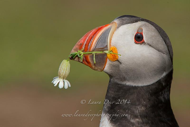 Flower gift - Seabirds