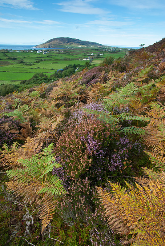 mamore Gap (07098271) - County Donegal