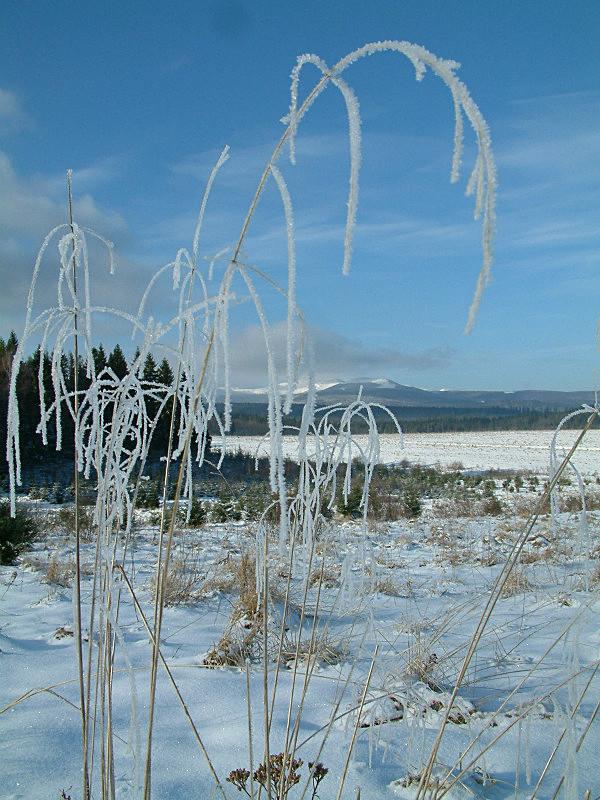 Winter Field - My Travels