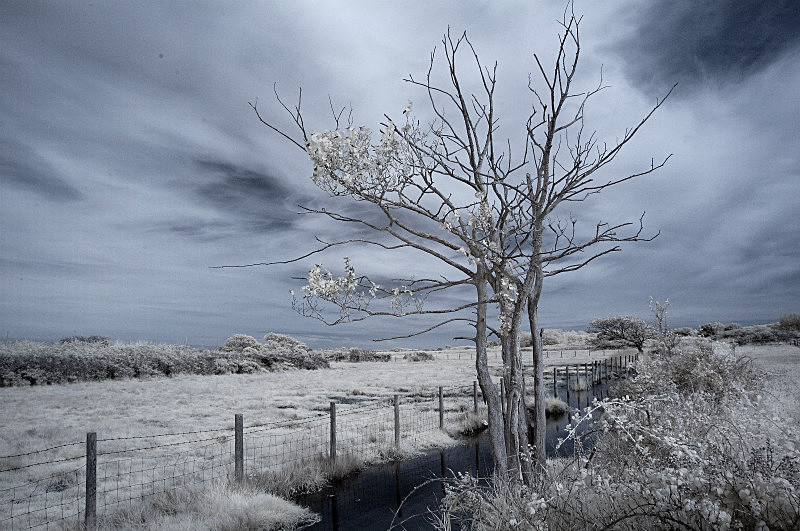 Early Morning Tree - Infrared Colour - Infrared Photography