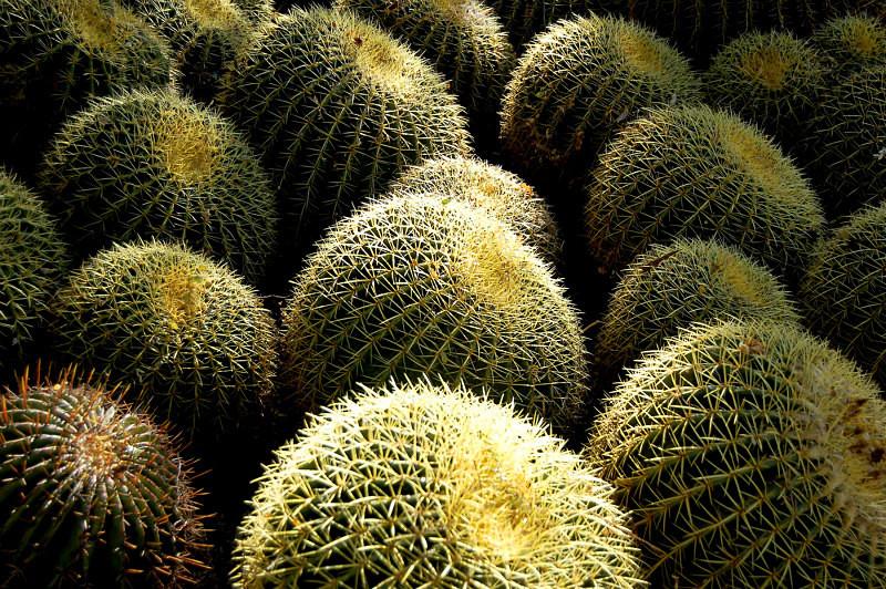 Arizona Cactus - Diverse