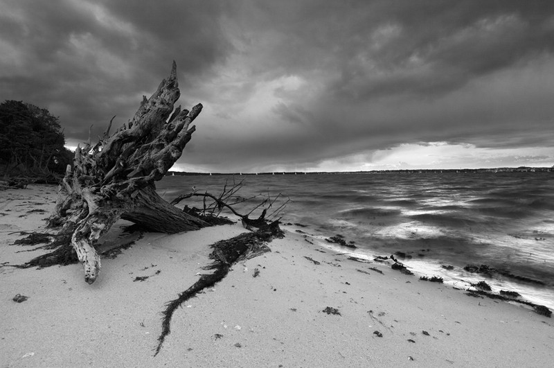 Brownsea Island Storm - Black & White Scenic