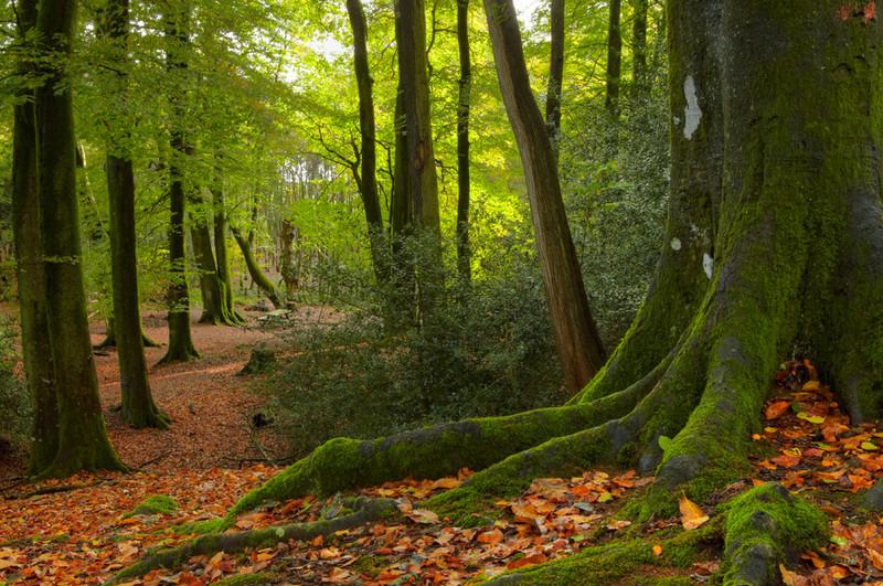 Thorncombe Woods, Puddletown, Dorset - Dorset Landscapes