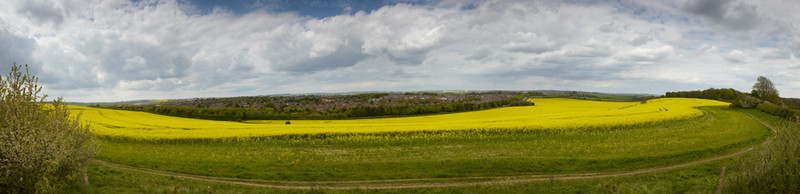 Dorchester Rapeseed - Panoramas