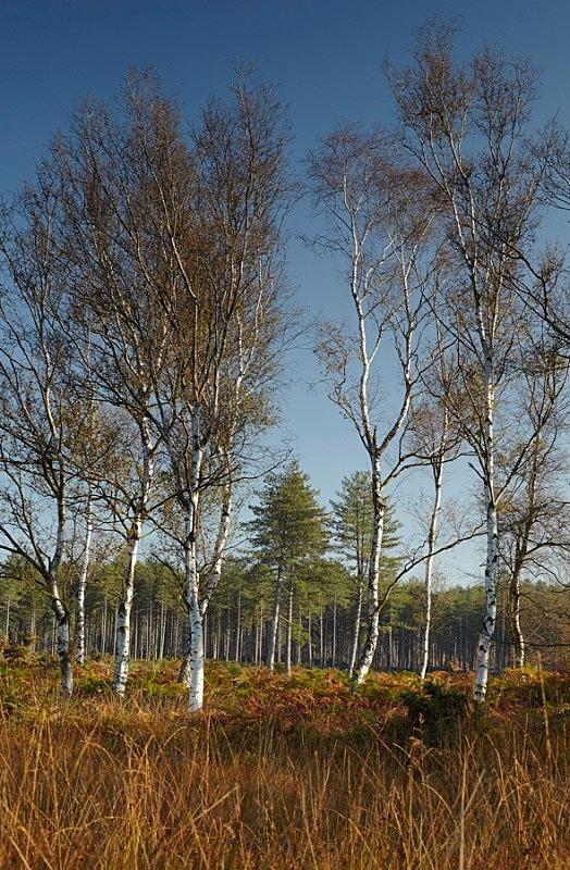 Wareham Forest - Dorset Landscapes