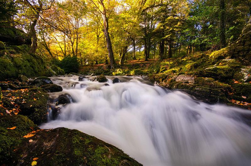 Autumn Forest - Down