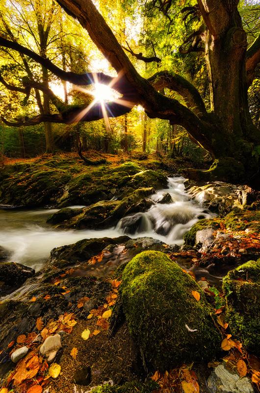 Autumn Light - Down