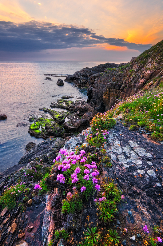 Wildflowers - Donegal
