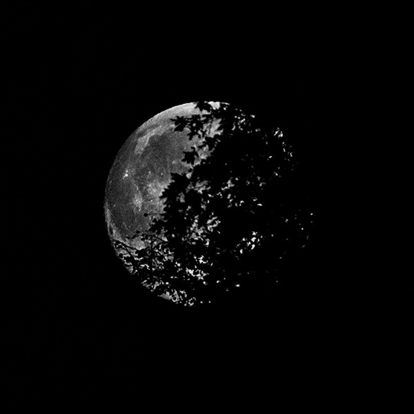 Full Moon through the trees! - The Sun, the Moon, and the Stars!