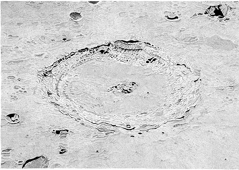DRAWING Langrenus PHOTO_Resize - Milan Blazek's Ink Drawings