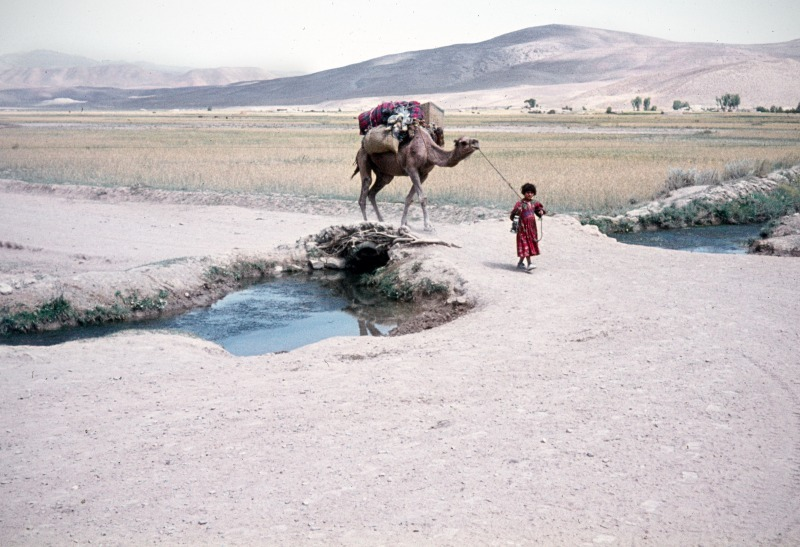 Kuchi nomad girl with camel in Afghanistan
