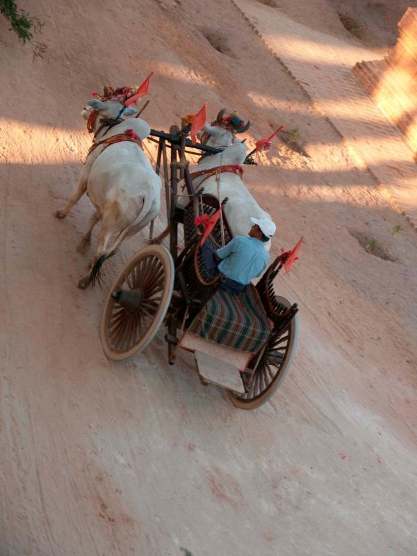 Burmese ox cart