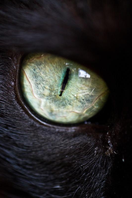- Felines