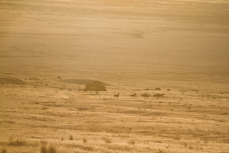 Wild Horses - For Sale Scenery Photography