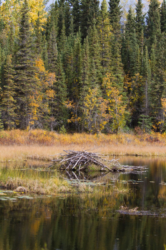 Beaver Dam Vertical - For Sale Scenery Photography