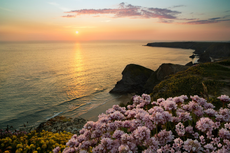 Summer Thrift - Cornwall  TWO .