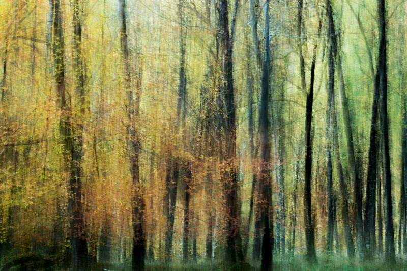 Enchanted Forrest. - Cornwall three