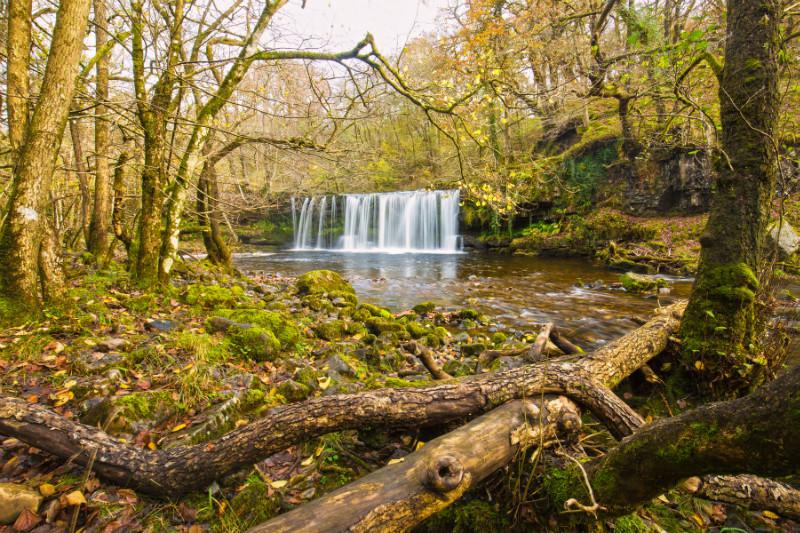 Fallen Tree - Wales