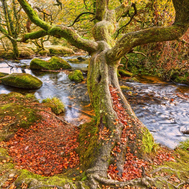Woodland Secrets. - Cornwall three