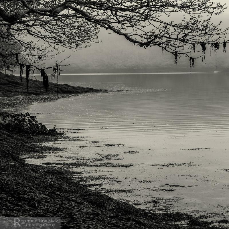 The Silence - Square minimal black & white .