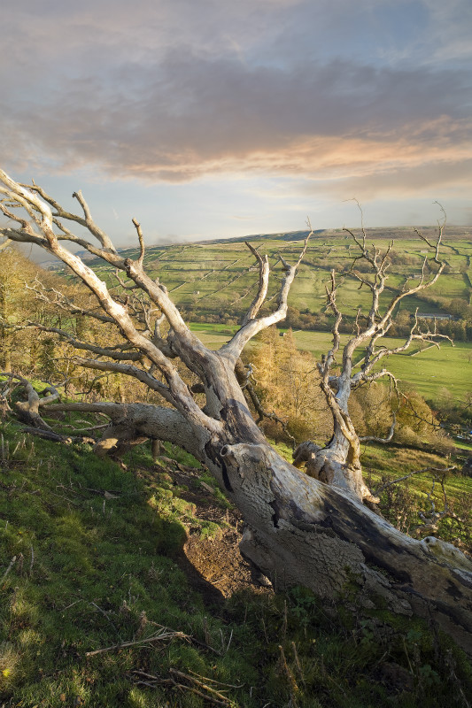 Branching out - Yorkshire