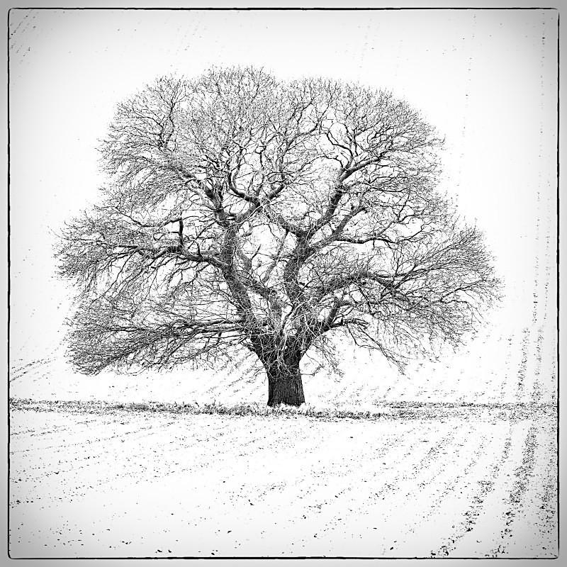 perfect Solitude. - Square minimal black & white .