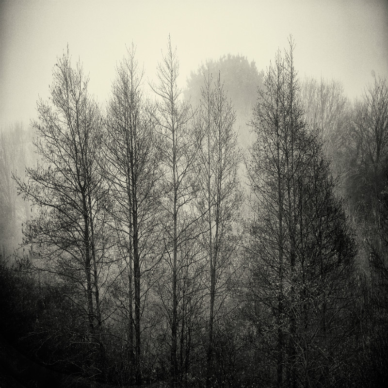 Silver Light. - Square minimal black & white .