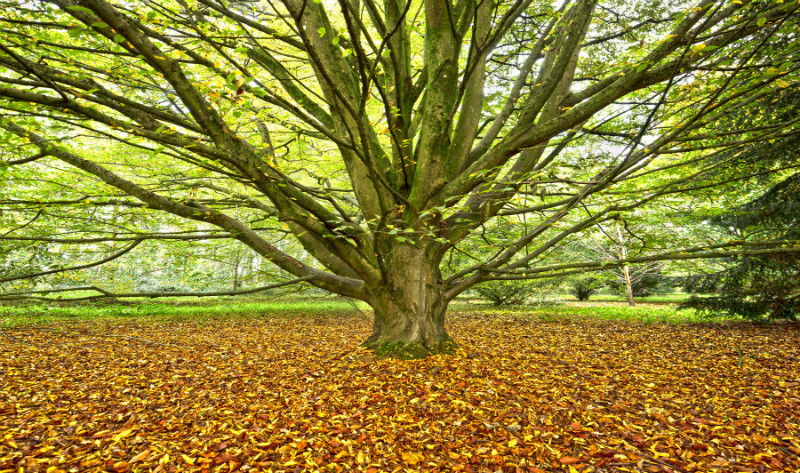 Autumn Glow. - Wales