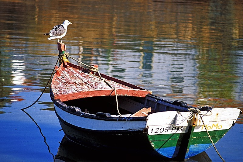 Seagull on Red Bow - Boats