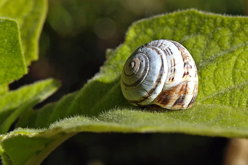 Snail on Leaf - Countryside
