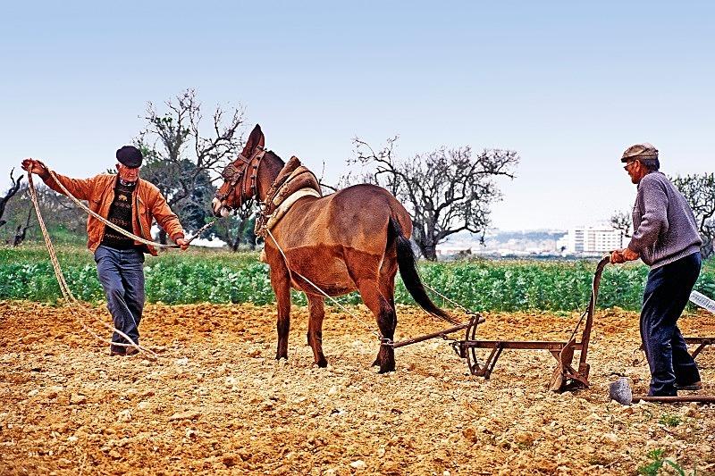 Ploughmen - Pêra - Countryside