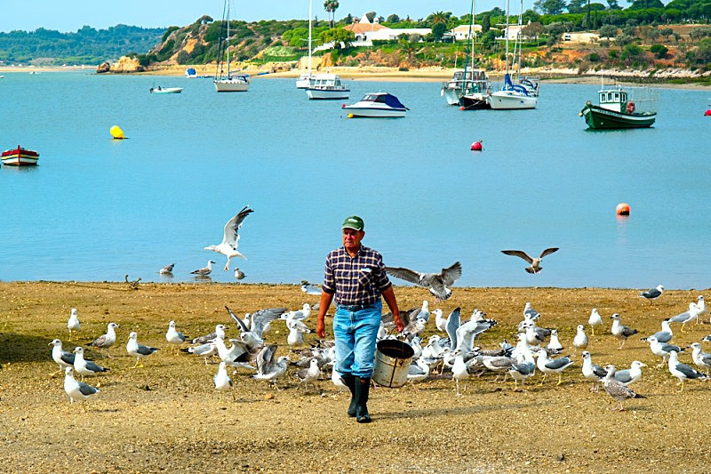Hungry Gulls - Alvor - Boats